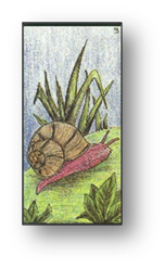 L'escargot carte 9 Oracle Gé